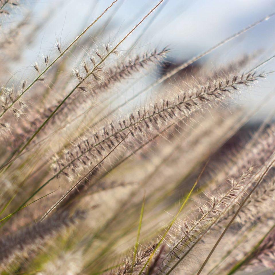 Allergie alimentari: ecco cosa c'è da sapere